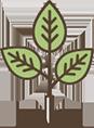 Tree Planted